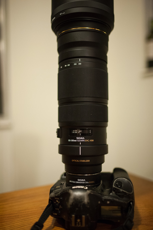 Sigma 120-300+1.4X on Canon 1DSII